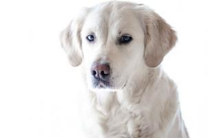 Antinol Sizarol – naturalna pomoc na zwyrodnienie stawów dla psów i kotów