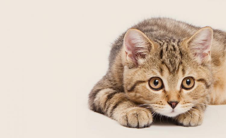 Witaminy dla kota